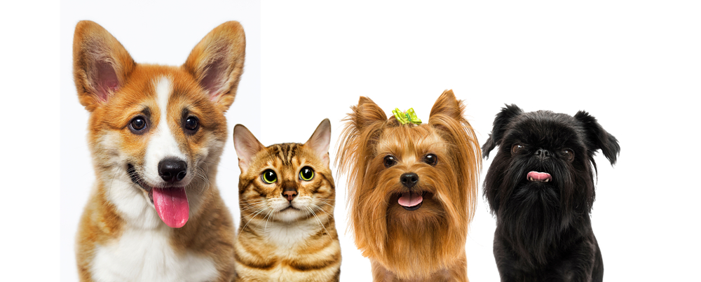 Cat Dog Look On White Background Dogs Cats Animals