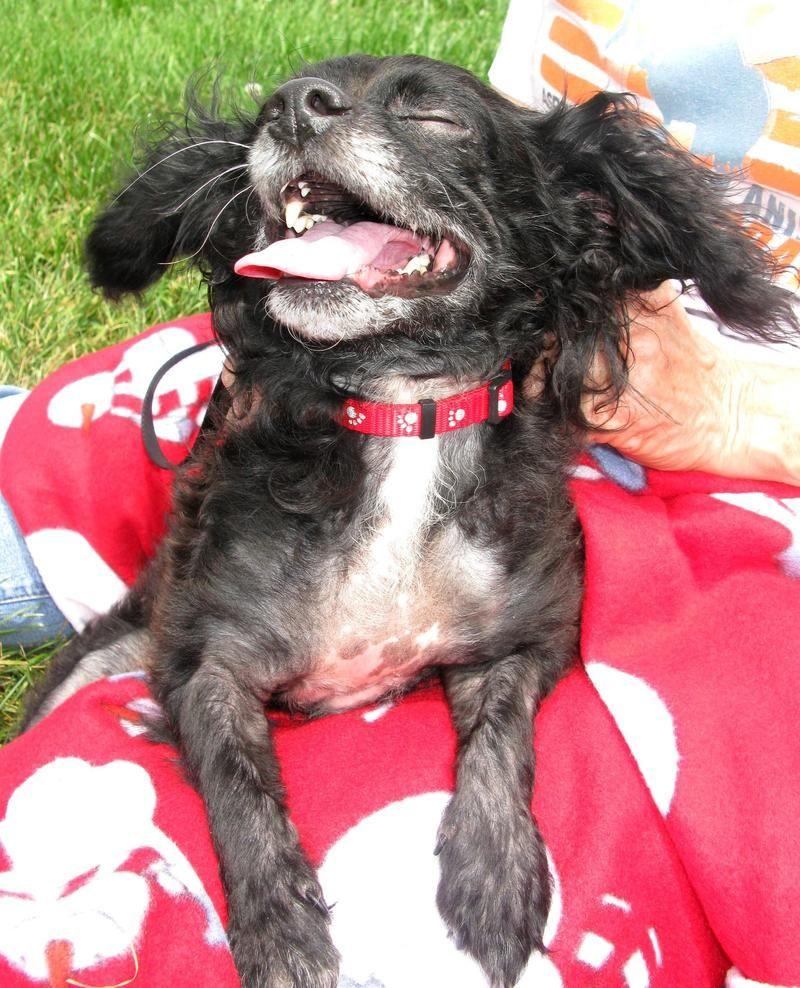 Adopt everett on petfinder cute animals animal rescue
