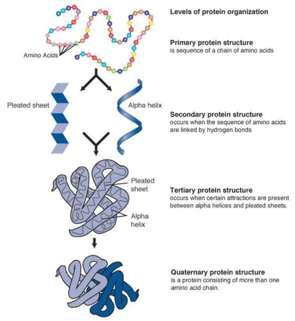 Molecules of Life – Molecules of Life Worksheet