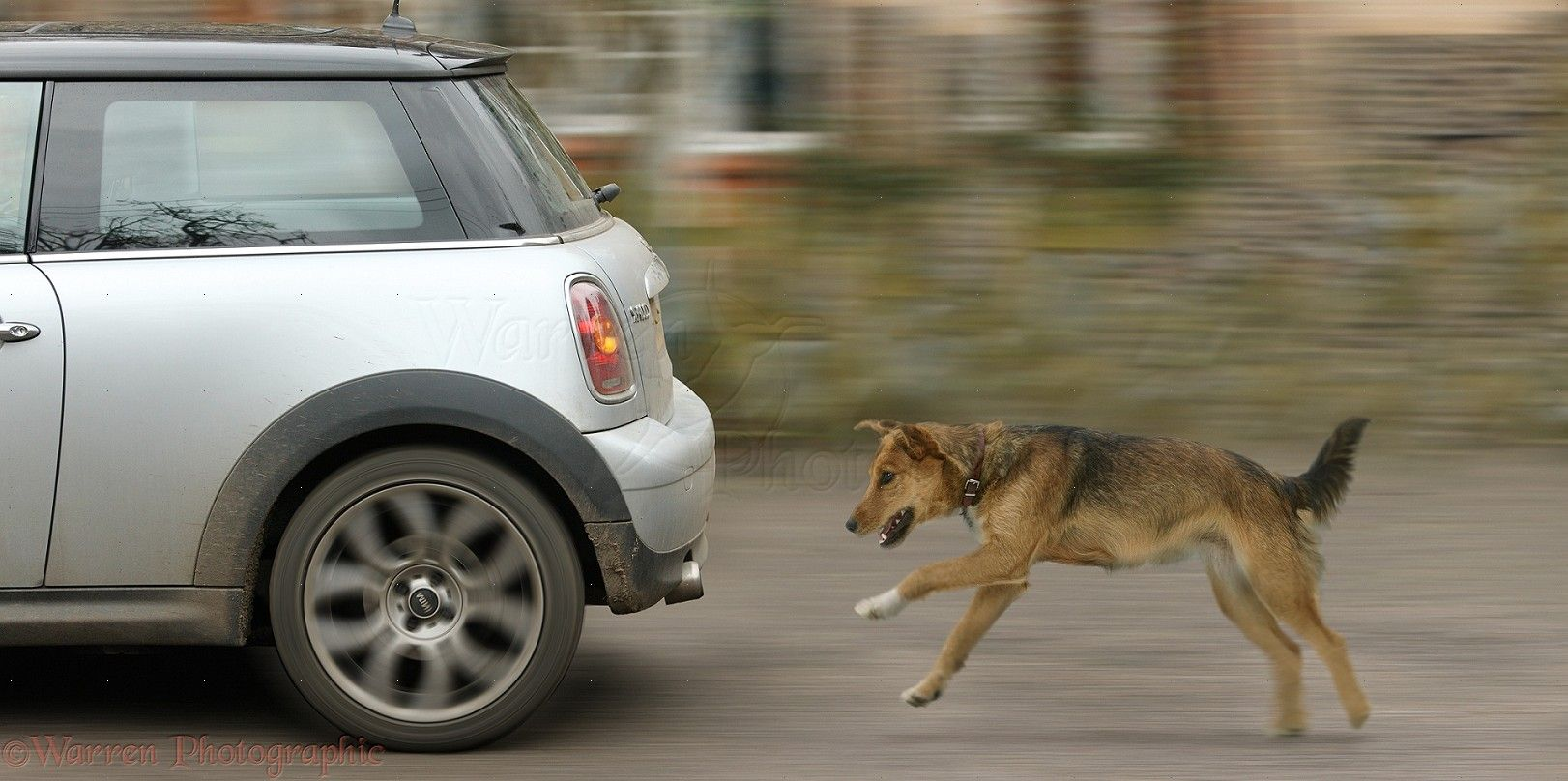 dog chases cars