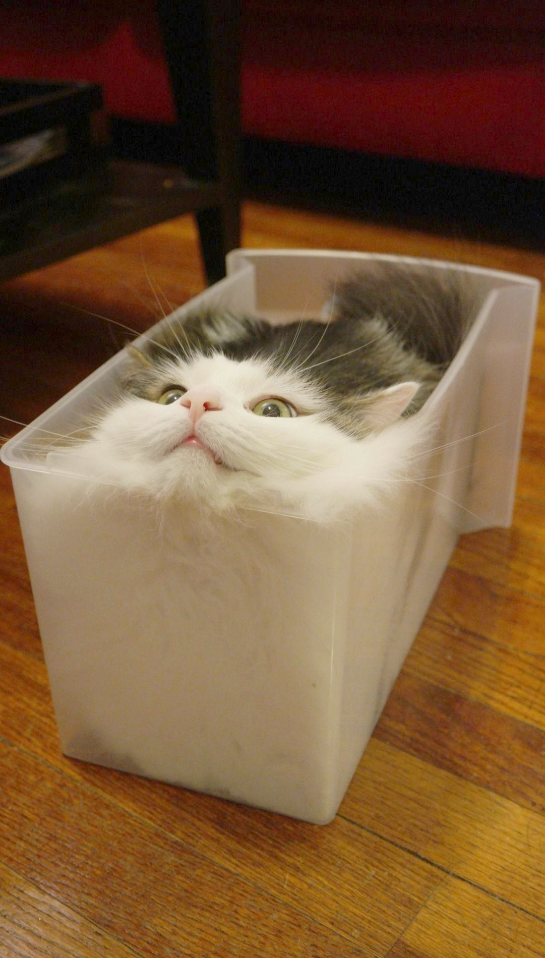 Cat In A Bread Box Look What I Found  Cute Cats And Kittens Wallpaper #cool  Cat