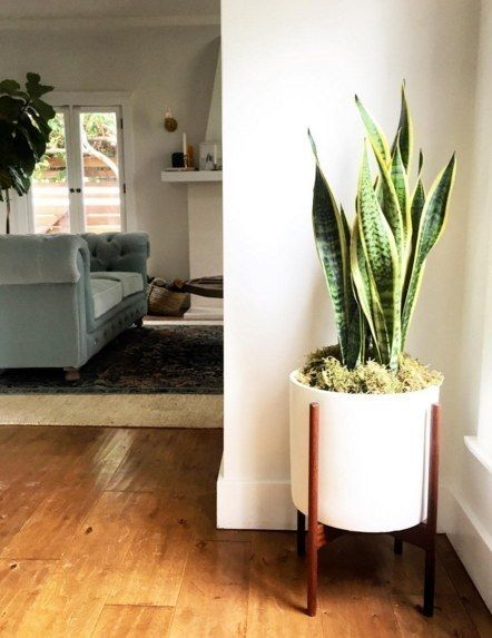 beautiful house plant stand. 15 Beautiful House Plants That Can Actually Purify Your Home  First