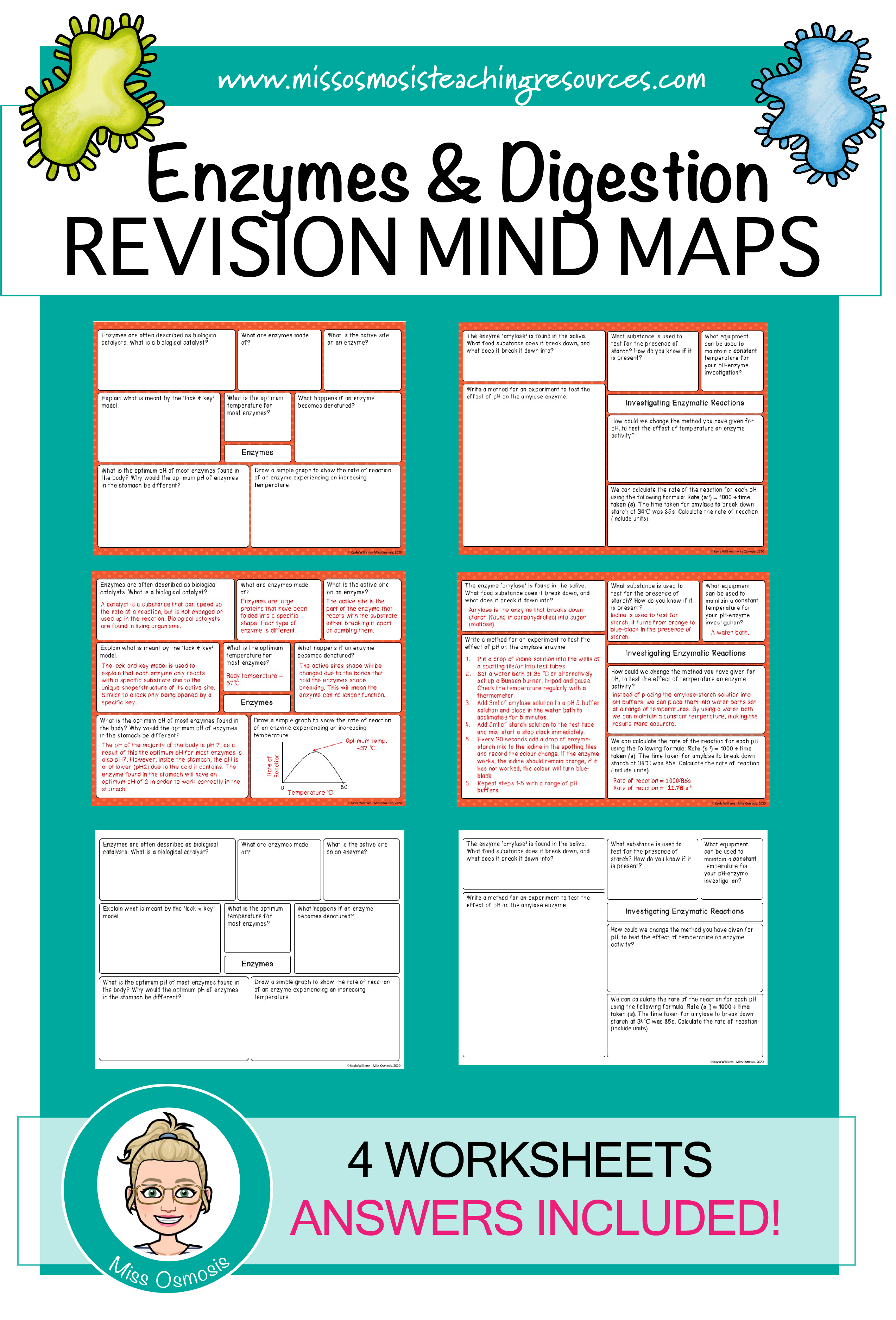 Enzymes Amp Digestion Revision Worksheets In With