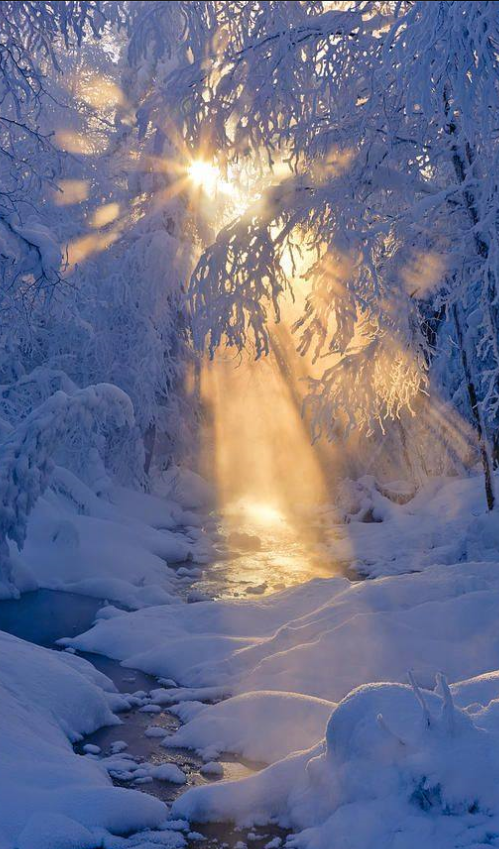 Small Stream In A Hoarfrost Covered Forest With Rays Of