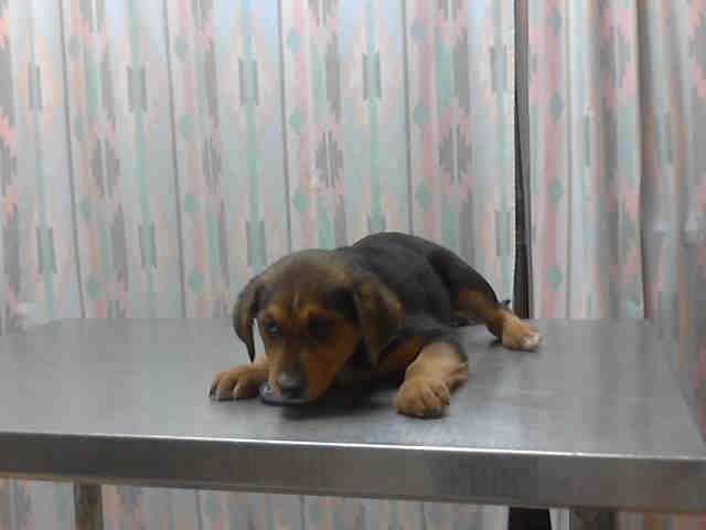 Ceecee Houston Texas Petharbor Com Animal Shelter Adopt A