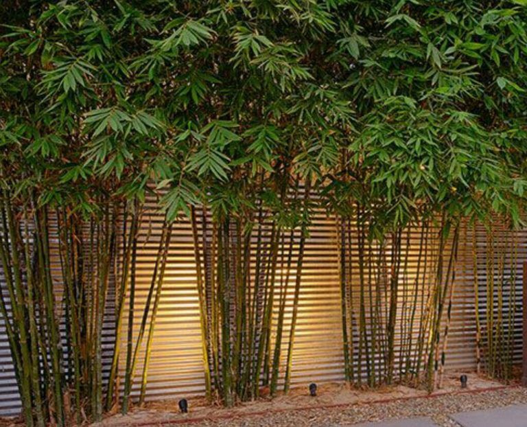 10 Bamboo Landscaping Suggestions Courtyard Gardens Design