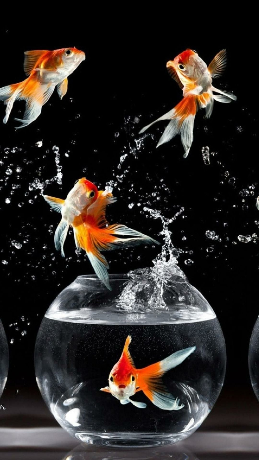 Unique Fish Wallpaper Phone Goldfish Wallpaper Fish Wallpaper Golden Fish