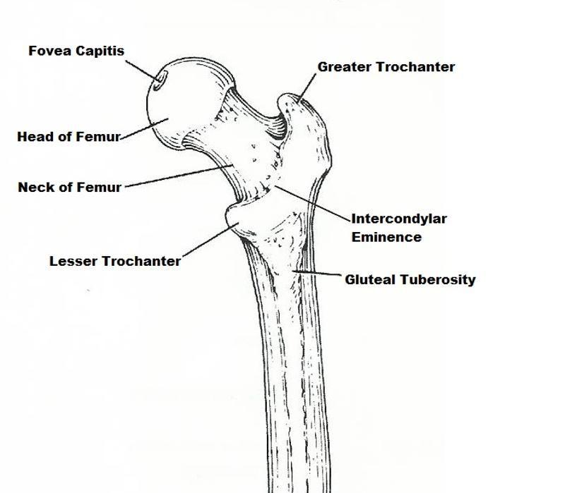 card-image   anatomy and physiology   Pinterest   Anatomy, Skeletons ...