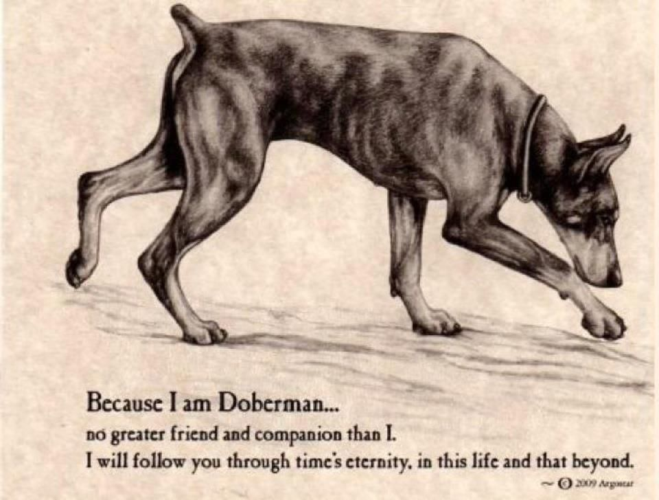 So So True I Love Dobermans I Miss My Genie Doberman