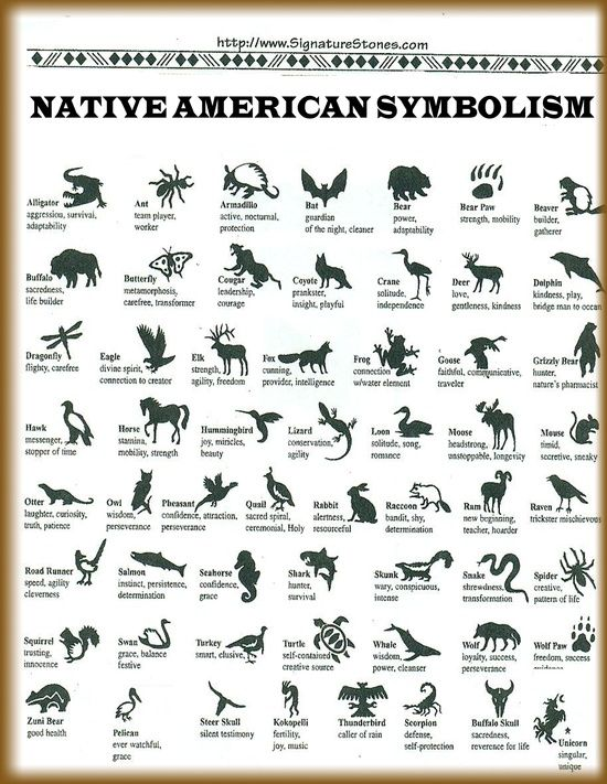 My Native Symbol Is The Bear Among The Native American Animal