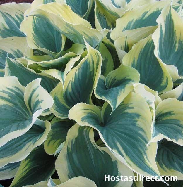 Urban Vegetable Gardening For Beginners: Gardening Tips For The Whole Family. Organic Gardening