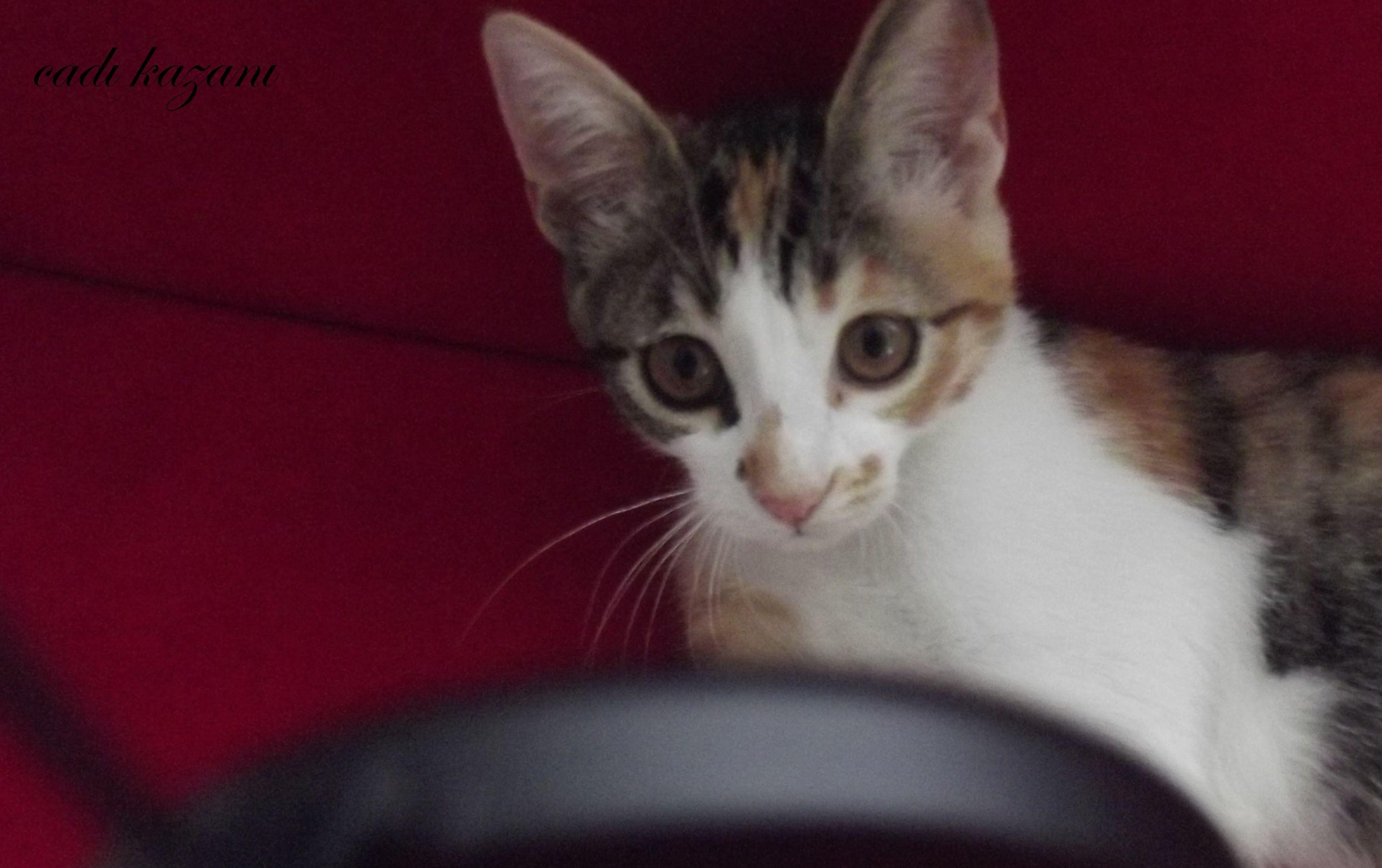 kittenlove13