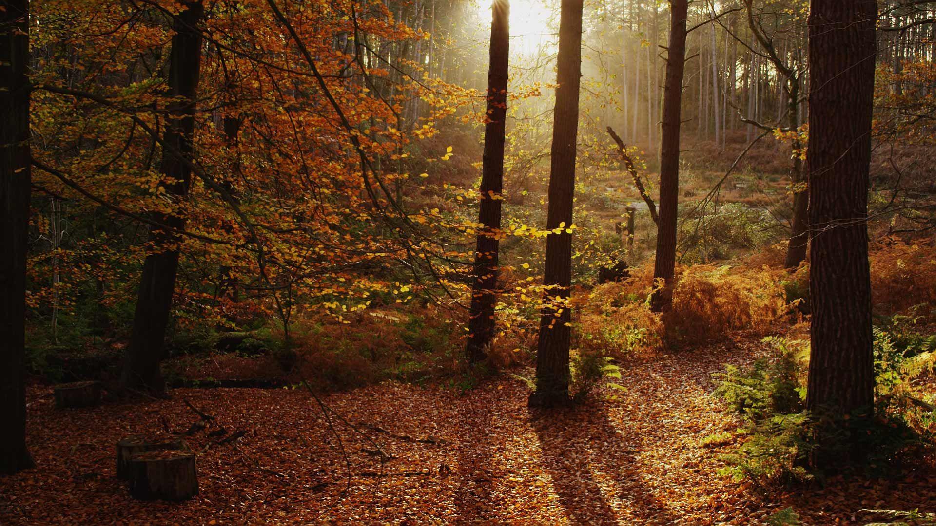EnglishWoodland_CheshireUK Autumn scenery, Cheshire