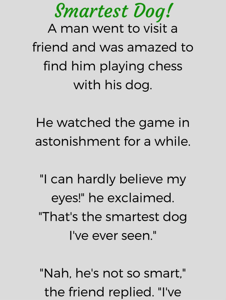 Smartest Dog Funny Story Funny Stories Funny