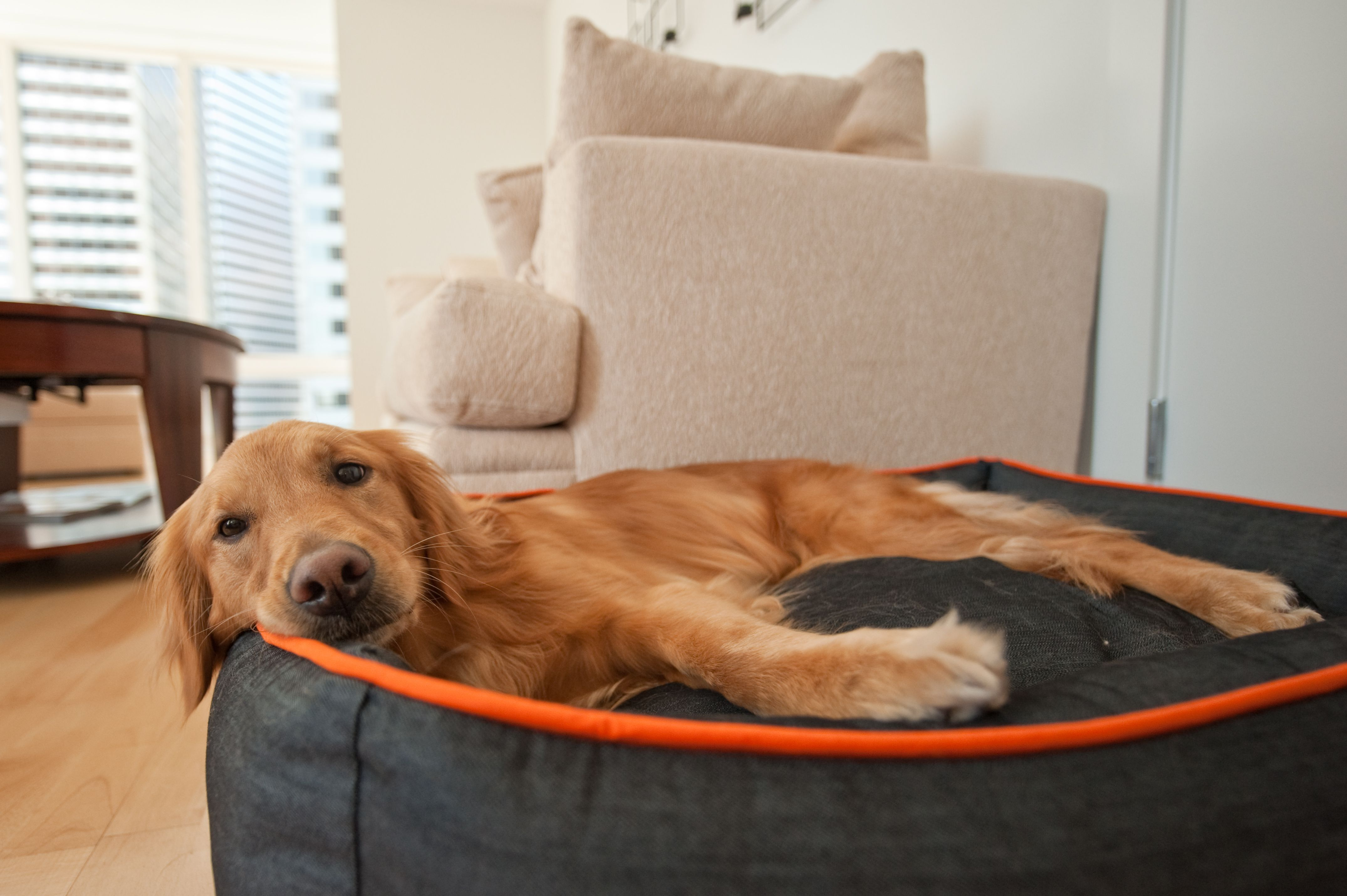 Beds baskets wicker beds lounge beds dog sofas