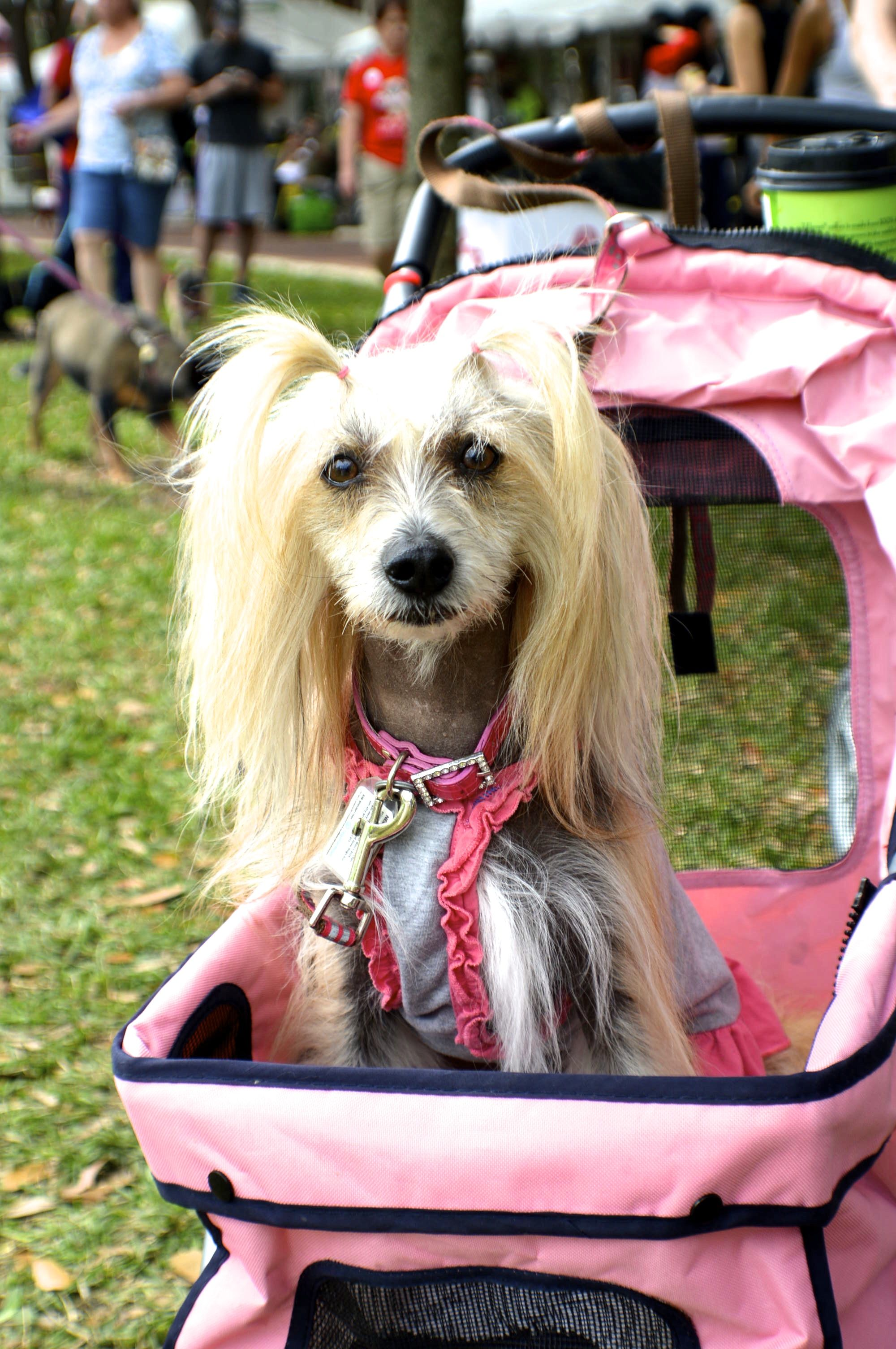 A little fashionista right there... HSBCWFTA Humane