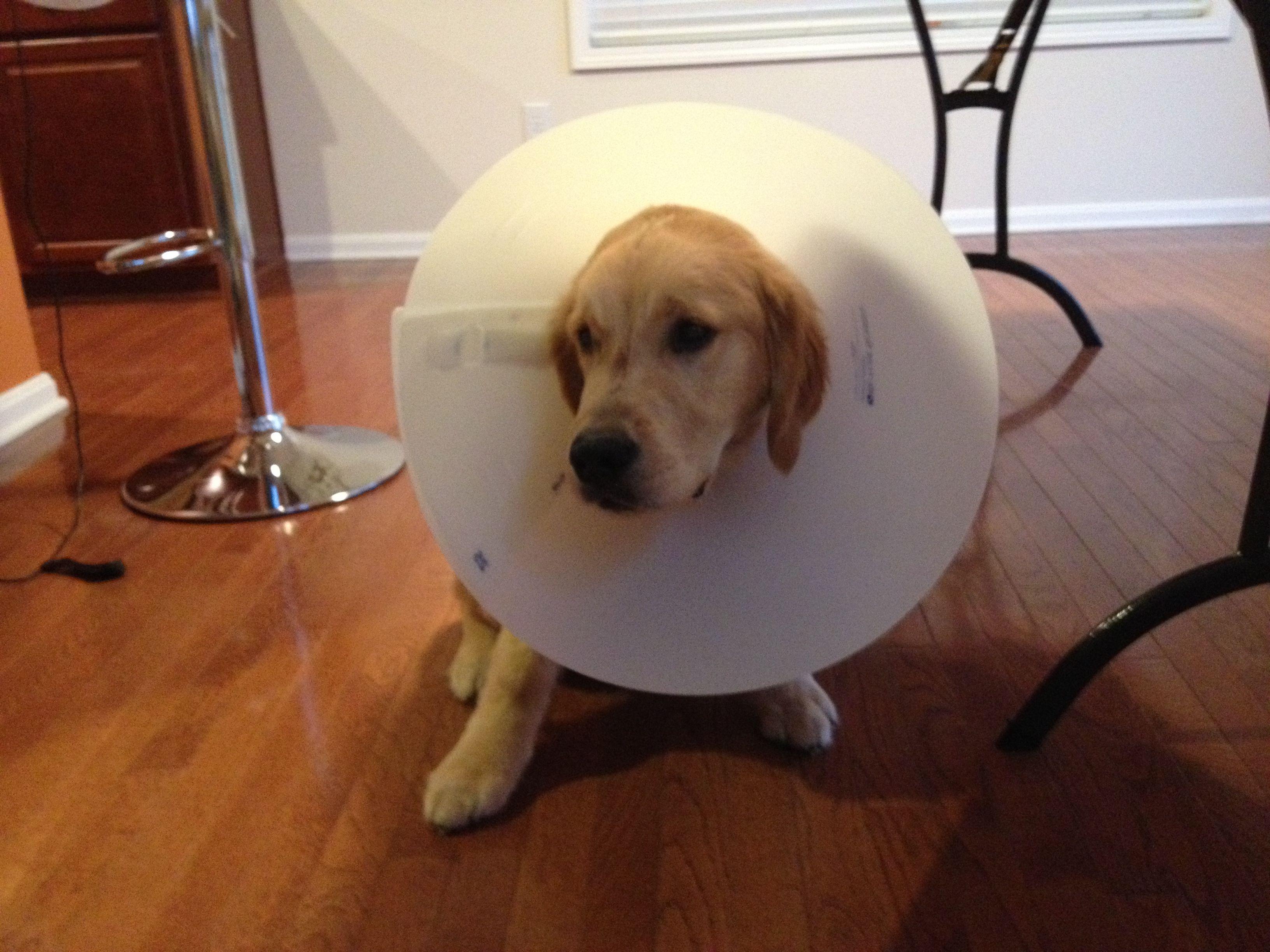 Cone of shame.