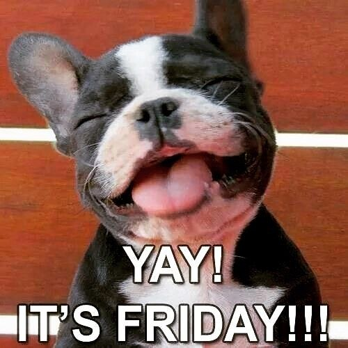 Happy Friday To All Dogs Cute Animals Happy Dogs Cute Dogs