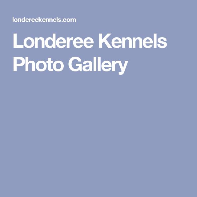 Londeree Kennels Scottsdale Va Kennel Photo Galleries Photo