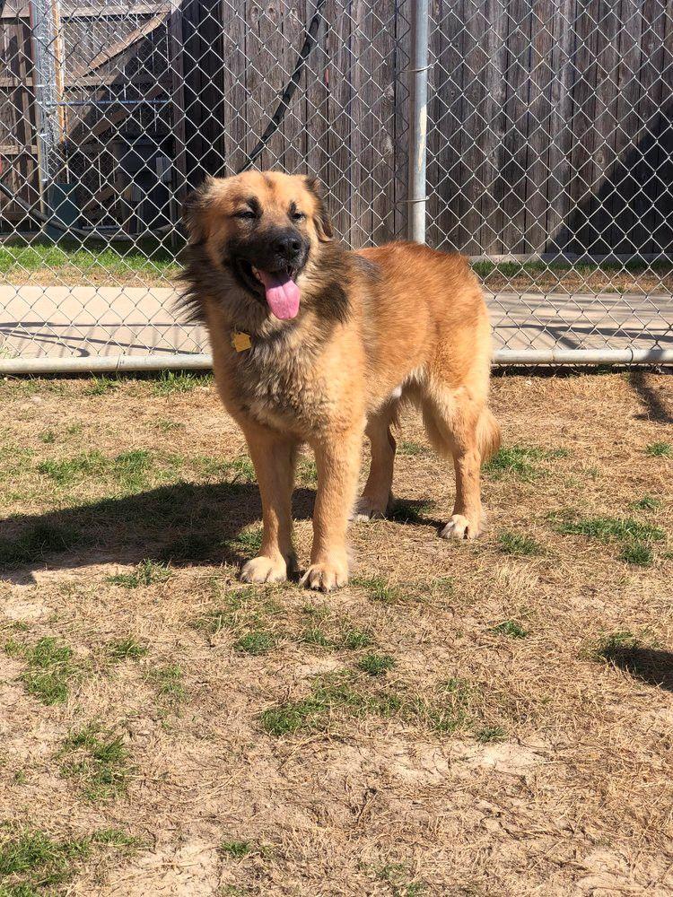 Adopt Babar Bear On Petfinder German Shepherd Dogs Dogs Dog Adoption