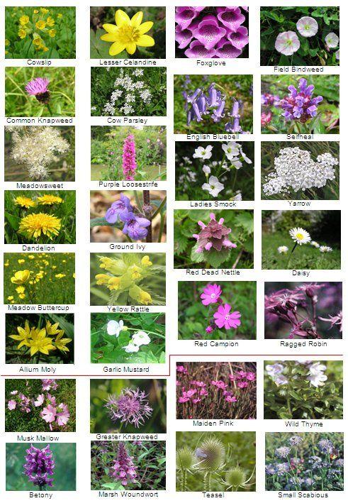 Wildflowers Jpg 491 709 British Wild Flowers Wild Flowers Uk Wildflower Garden