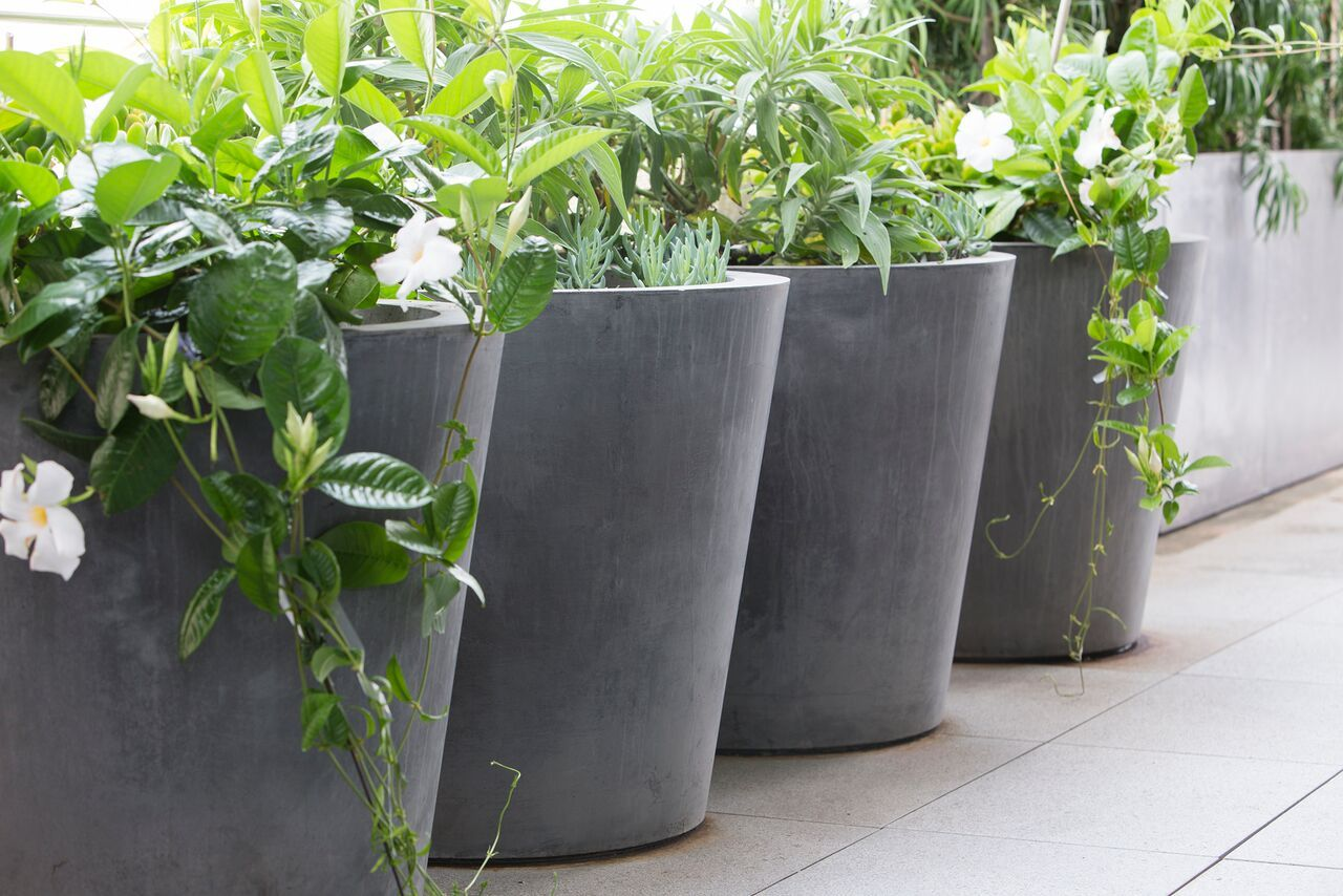 herbs flowers  foliage in contemporary pots  peter fudge  - herbs flowers  foliage in contemporary pots  peter fudge