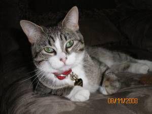 Denver Pets Cat Craigslist Cats Pets Cats Pets