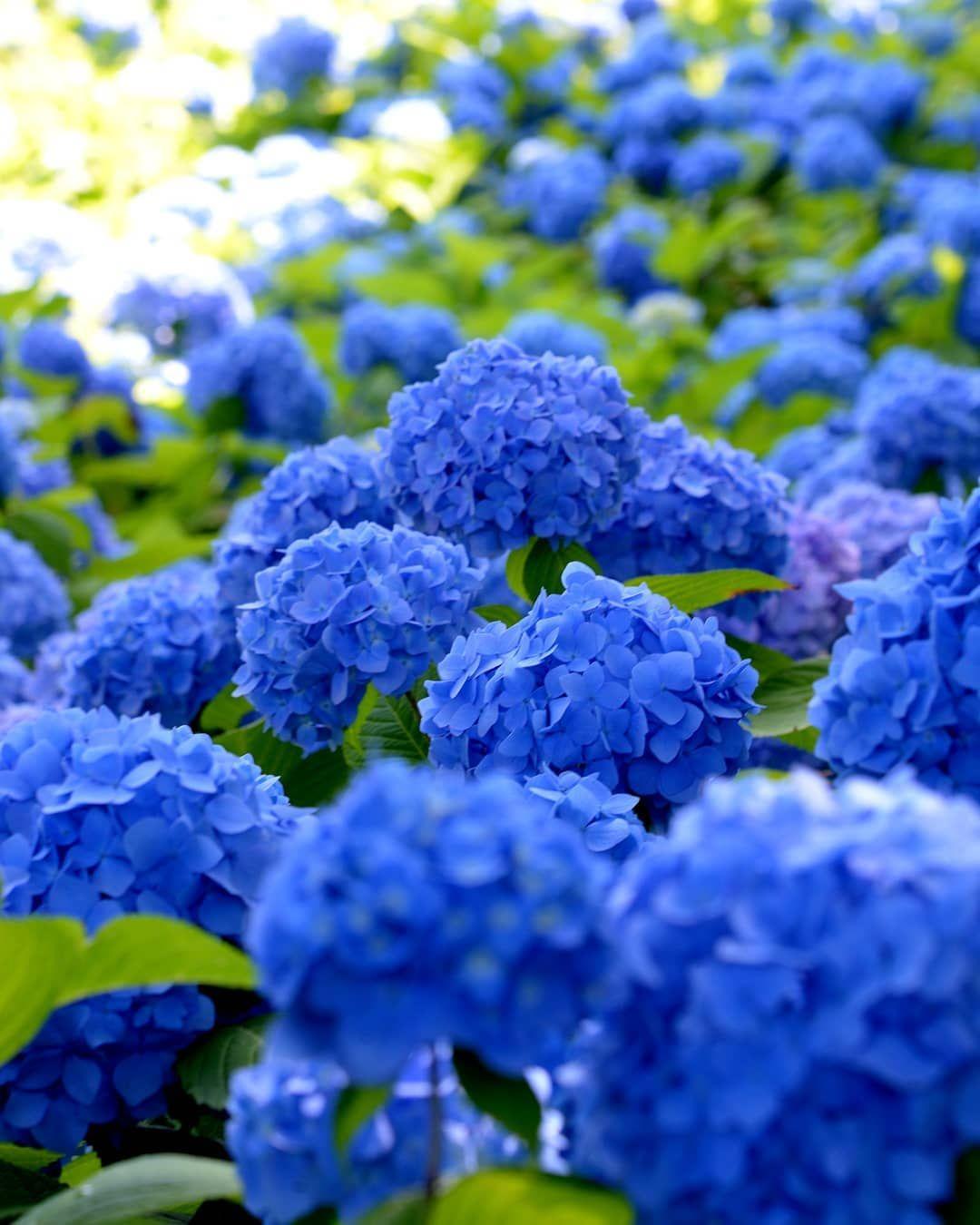 Unshoji Temple Japan Garden