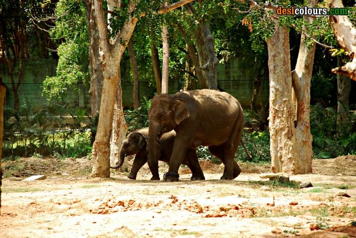 Bangalore Zoo, Bangalore, India Park photos, Zoo park