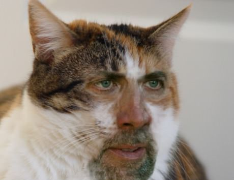 Image result for cat man