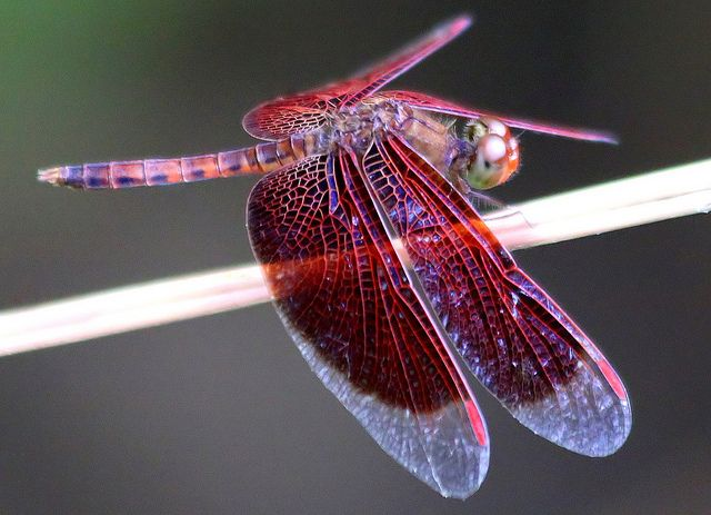 The Dragonfly And Its Symbolic Meaning Spirit Pinterest