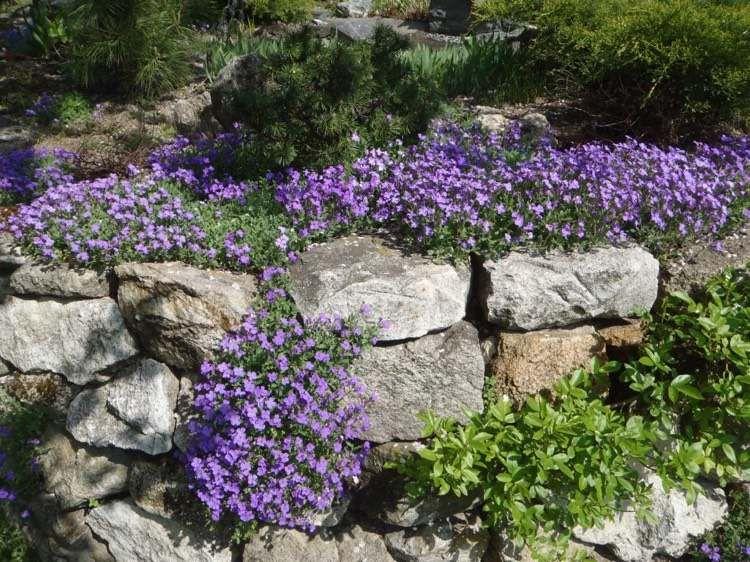 naturstein trockenmauer bepflanzen geignete pflanzen f r mauerfugen garten pinterest. Black Bedroom Furniture Sets. Home Design Ideas