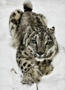 "beautiful-wildlife: "" Snow Bars by Darian """