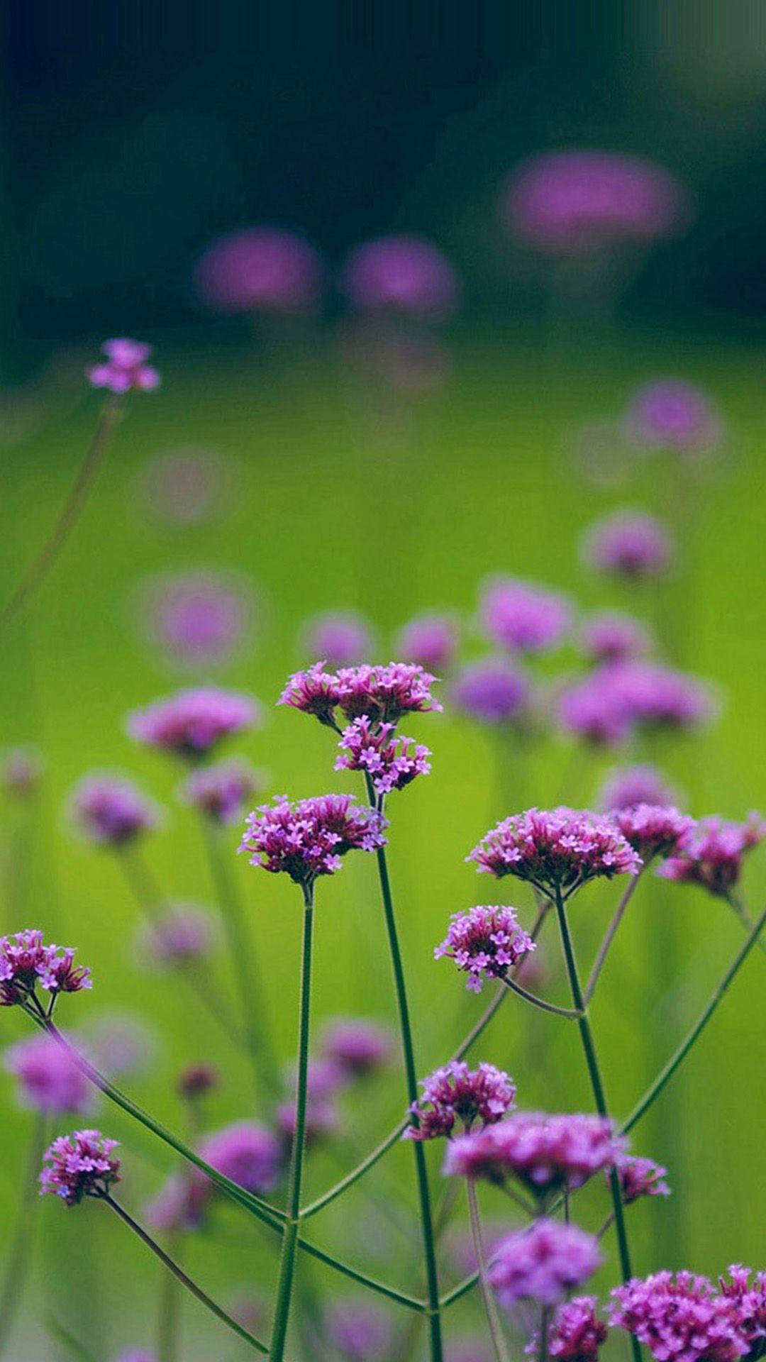 Best Natural Purple Flower Purple Flowers Flowers Nature 400 x 300