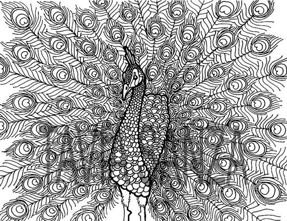 Peacock Coloring Book Page by taviasanzaothershop on Etsy