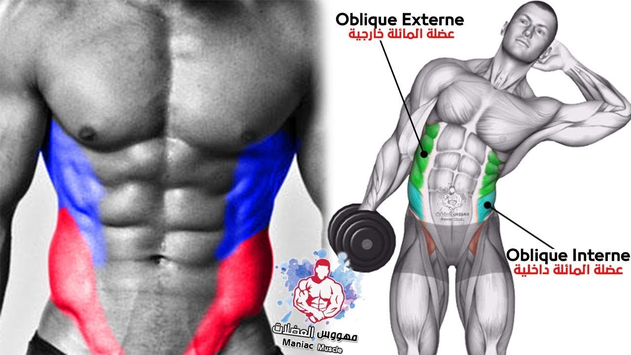 Pin On Musculacao
