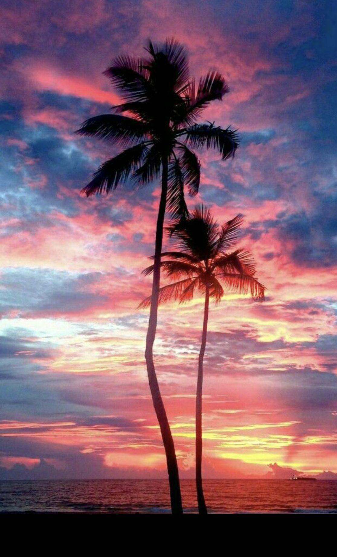 Blue Pink Sunset Tree Wallpaper Iphone Palm Trees Wallpaper Tree Wallpaper