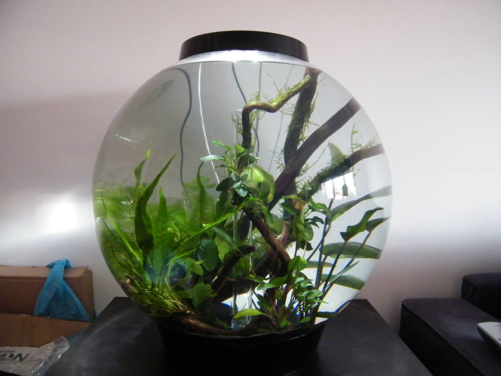 The Finished Modified Biorb With Real Plants External Canister Filter Aquascape And Inline Heater Aquarium