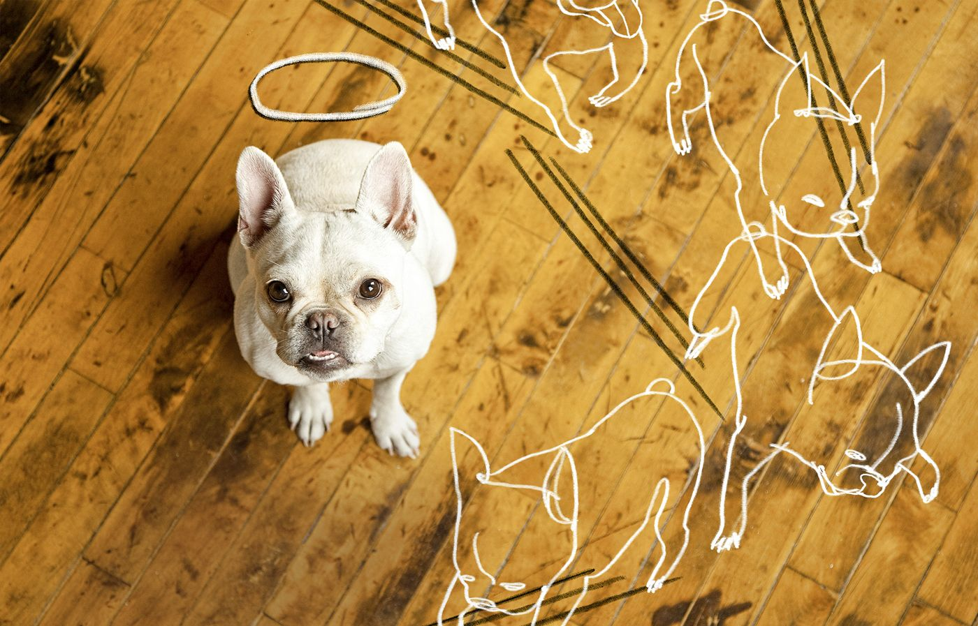 How to Repair Dog Damage to Wood Flooring Scratched wood