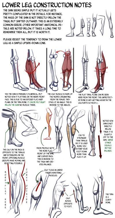 construcción de la pierna inferior | Anatomía | Pinterest | Piernas ...