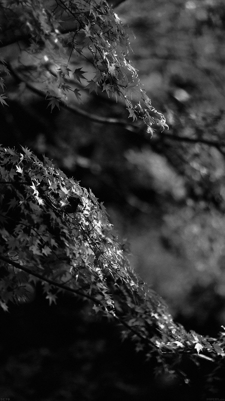 Get Wallpaper Http Bit Ly 2fnbyad Mh98 Japanese Maple Tree Fall Nature Black And White Via Http Japanese Maple Tree Fall Wallpaper Best Iphone Wallpapers