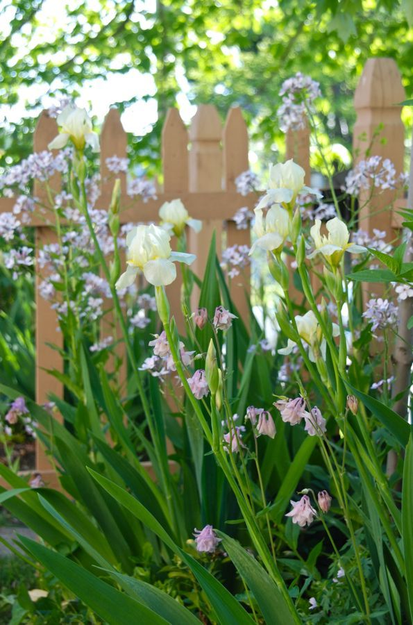 Iris Combinations for May | Pinterest | Bearded iris, Iris and Gardens