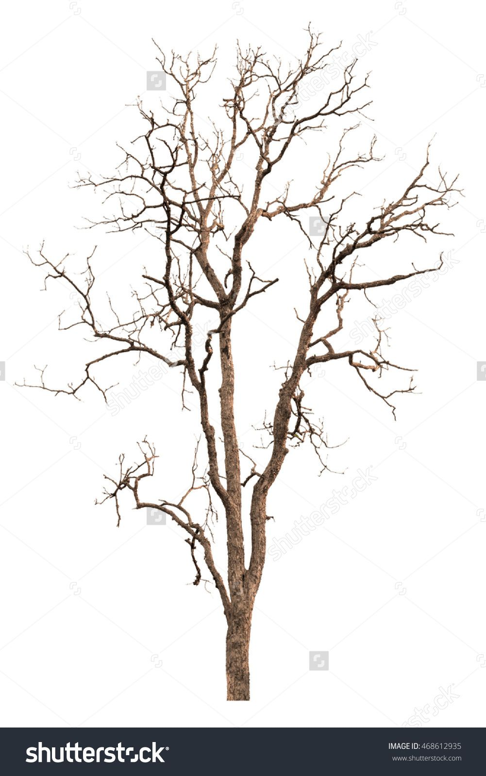Dead Tree Isolated On White Background With Clipping Path Tree Dead Dry Isolated Nature White B Dry Tree Tree Photoshop Landscape Architecture Graphics
