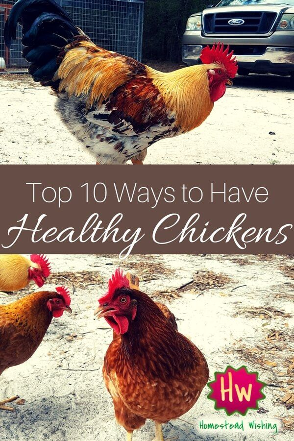 Raising Chickens for Meat: Do-It-Yourself Pastured Poultry