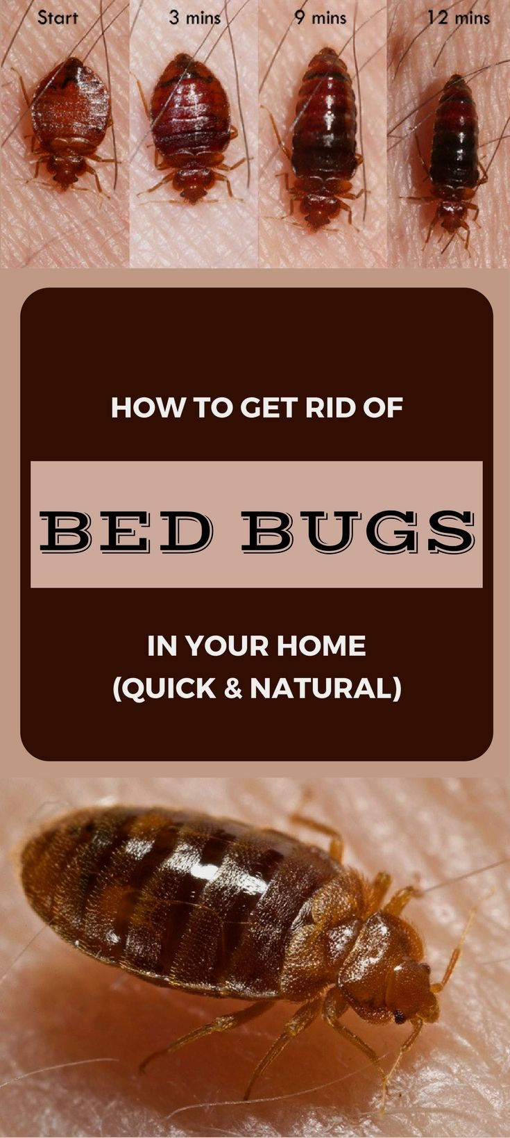 Pin by Gyuzeltihonova on Diy Cleaners Rid of bed bugs