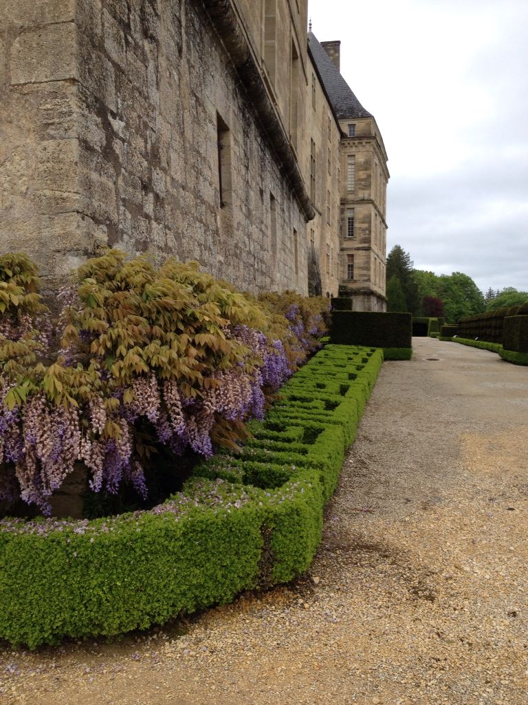 Wisteria covered walls, boxed hedge contrast