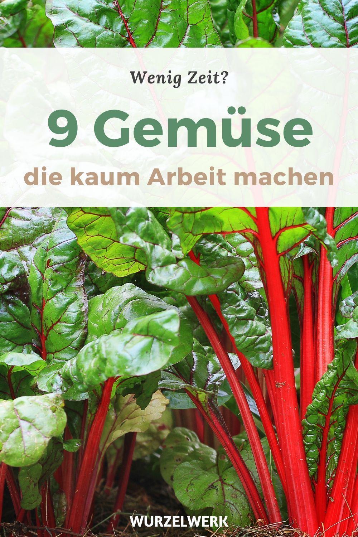 Gemüsegarten für Anfänger: 9 Gemüse, die kaum Arbeit machen