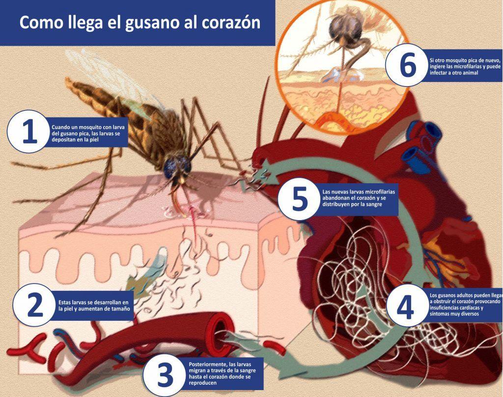 tratamiento de gusanos en la piel