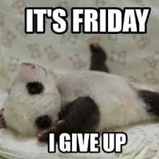 Panda Memes Google Search Animal Memes Clean Animal Memes Funny Animal Memes