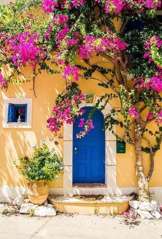 Beautiful Blue Door Flowers Tree Backdrops for Pictures G-671 | Best greek  islands, Backdrops, Greek islands to visit